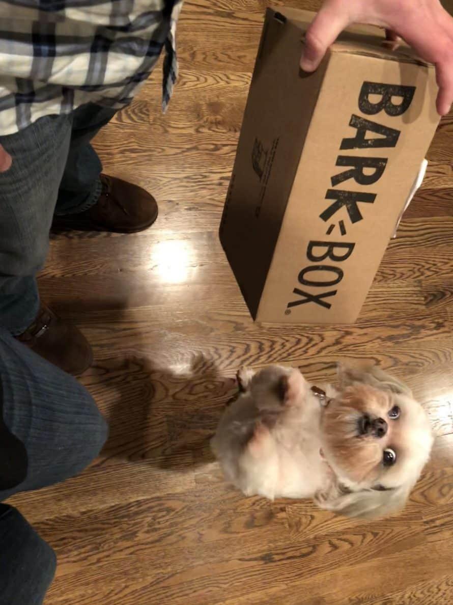 Roxy's First BarkBox
