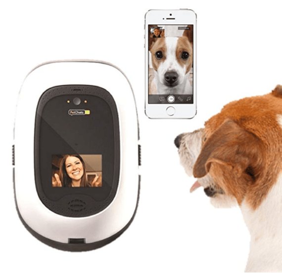 Talk to your dog on facetime